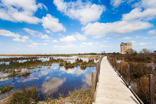 Marshes of the Carbonniere Tower - Camargue - Grand Site de France