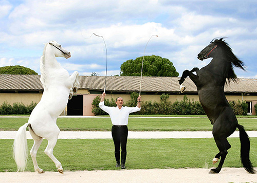 Show-times-Lucien-Gruss-at-the-Uzes-Haras-national''